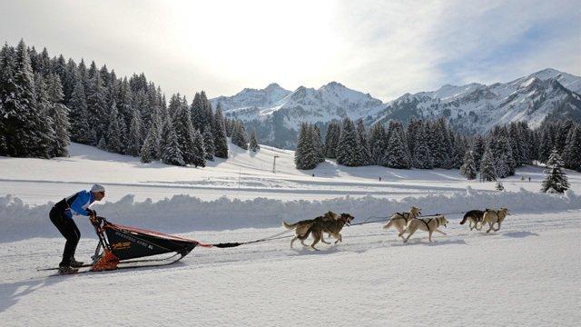 INTERNATIONAL DOG SLED RACE